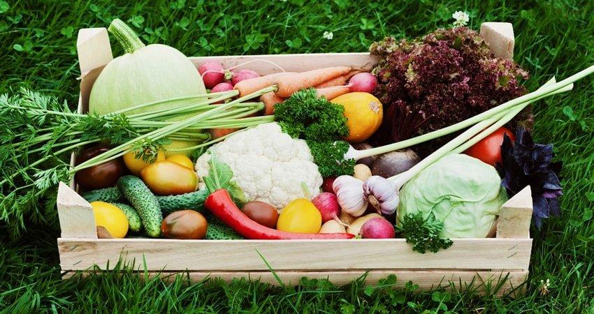 Rau hữu cơ phát triển mạnh bên nước ngoài song khó sản xuất tại Việt nam