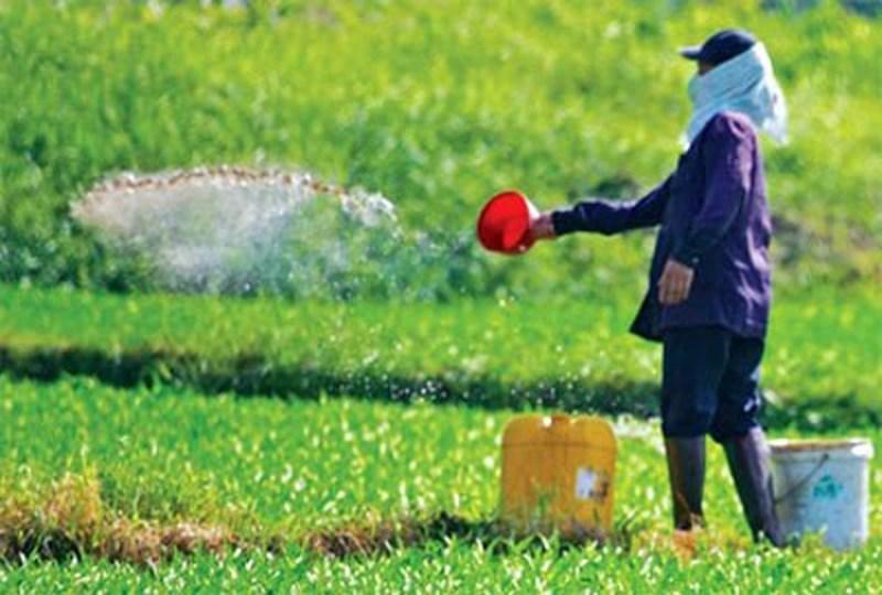 Rau trồng bị lạm dụng hóa chất độc hại