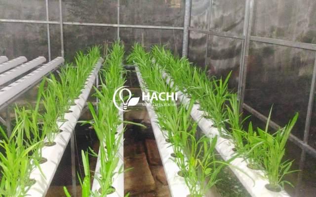 Hachi - Vì một nền nông nghiệp bền vững