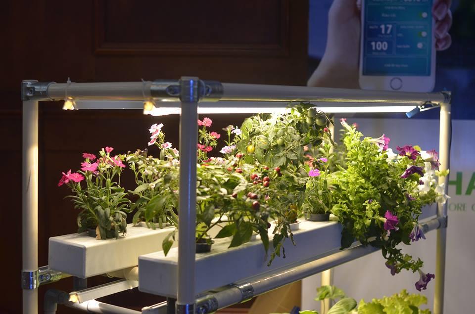 Hệ thống thủy canh đèn led trồng trong nhà