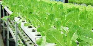 banner_hydroponics2