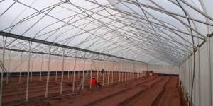 Xây dựng mô hình nhà kính trong trồng rau trang trại
