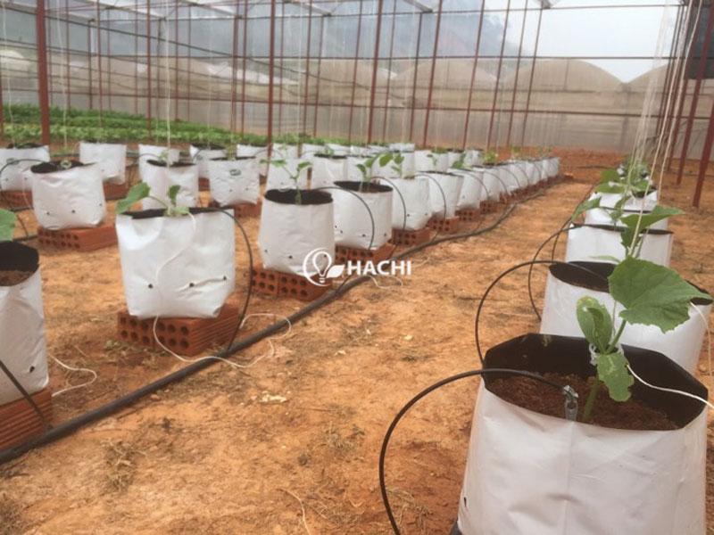 Hệ thống tưới nhỏ giọt trồng cà chua và dưa chuột tại trang trại thủy canh Đà Lạt Hokkaido