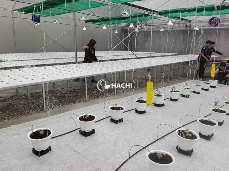 Khu vực nhỏ để trồng cà chua, dưa chuột của khu trang trại