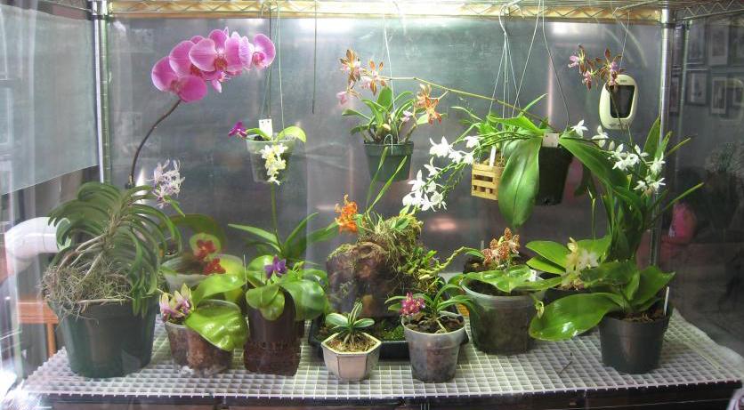 Hình 2: Hoa lan được trồng trong lồng kính bằng đèn LED.