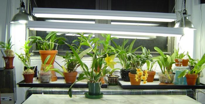 Hình 3: Hoa lan được trồng bằng đèn LED.